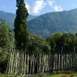 Yaksom/Sikkim, allée de drapeaux religieux