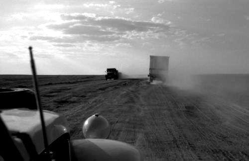 bouvier en route dans le désert