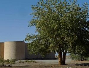 Un grand arbre se dresse près du bâtiment